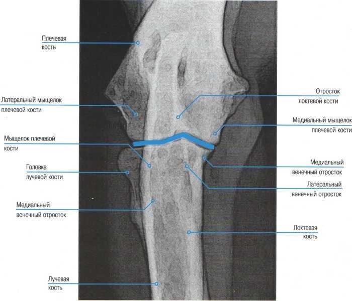 артроза локтевых суставов у собак